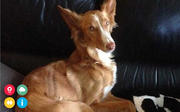 Help mijn maatje Willy: PTSS/ADL-hond in opleiding